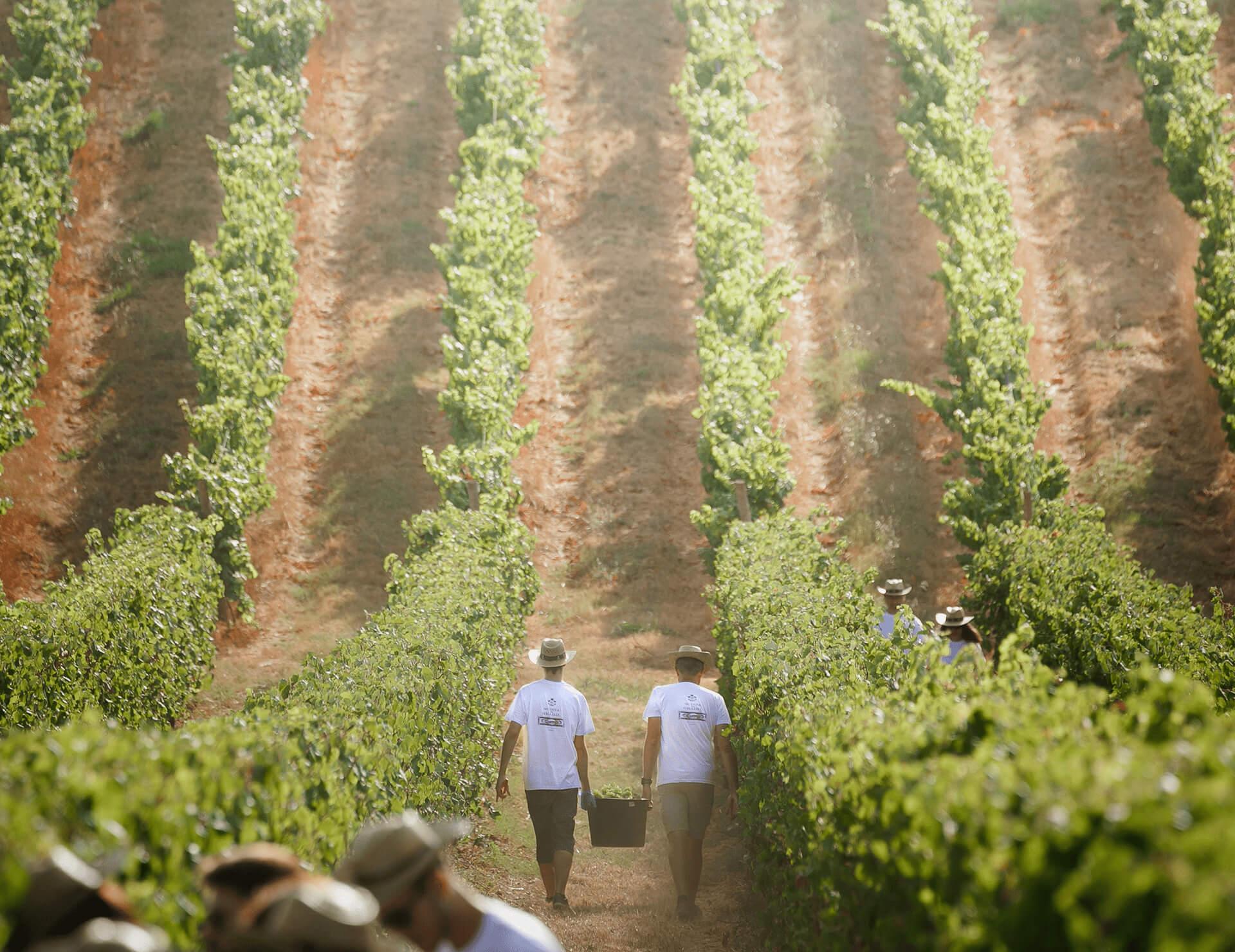 Quinta do Gradil Vineyards